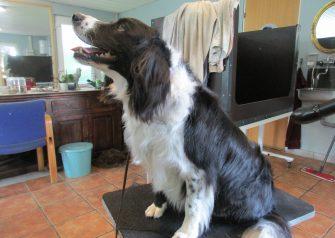 Hundesalon alt for hunden - Kolo