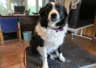 Hundesalon alt for hunden - Molly