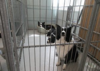 Hundesalon alt for hunden - Molly, Bailey & Kolo