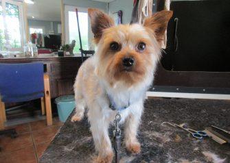 Hundesalon alt for hunden - Merle