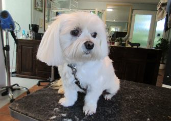 Hundesalon alt for hunden - Karla