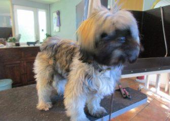 Hundesalon alt for hunden - Emil