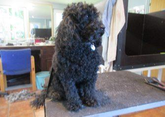 Hundesalon alt for hunden - Yoyo