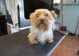 Hundesalon alt for hunden - Fifi