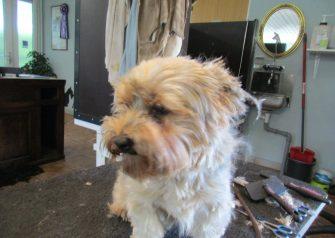 Hundesalon alt for hunden - Futte
