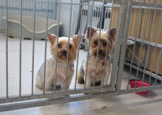 Hundesalon alt for hunden - Fifi & Futte