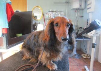 Hundesalon alt for hunden - Din hundesalon i Aalborg